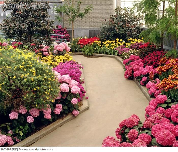 Backyard Flower Beds: Pathway With Flower Beds And Trees [1803987] > Stock