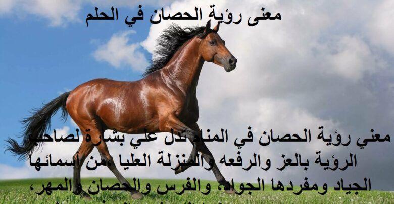رؤية الخيل في المنام ومعاني ألوان الحصان في الحلم Horses Animals