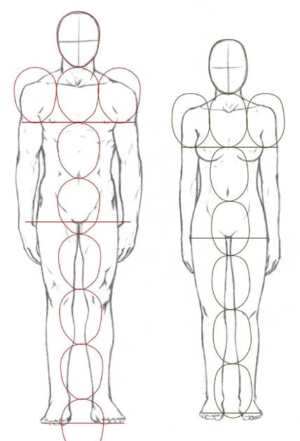 Pin By Desi Fei On Anatomy 2 In 2018 Pinterest Drawings Art And
