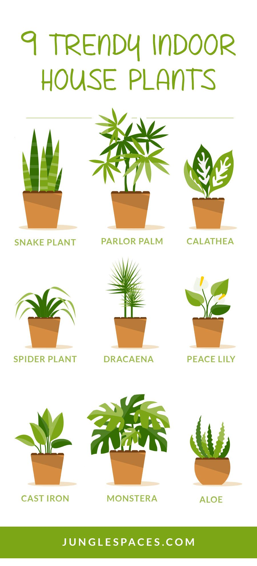 9 trendy houseplants that don 39 t need direct sunlight indoor plants room with plants plants. Black Bedroom Furniture Sets. Home Design Ideas