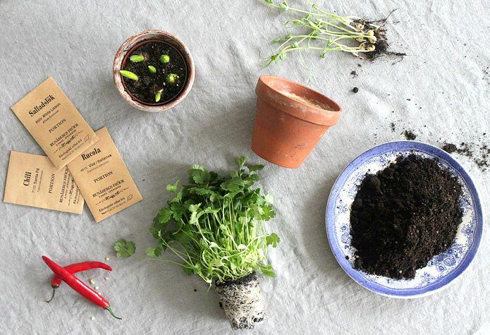 Sustainable Day   DIY - VÅRODLING HEMMA