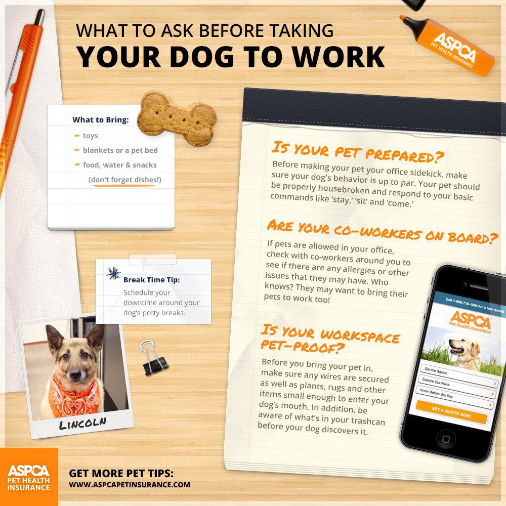 Benefits of bringing your dog to work your dog dog