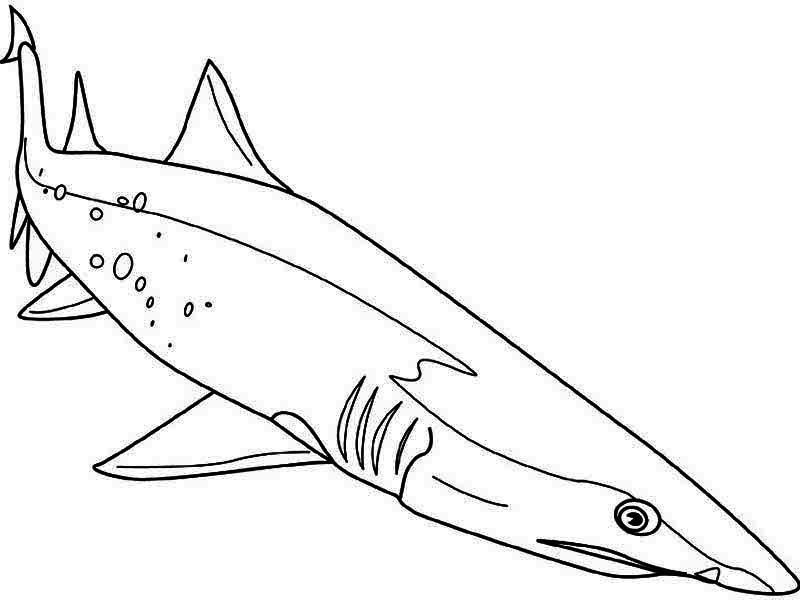 A Sand Tiger Shark Dive Down To The Seabed Coloring Page Kids Play Color Shark Coloring Pages Shark Diving Coloring Pages