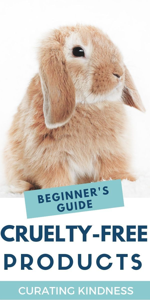 The Beginner's Guide to Cruelty-Free Beauty Products ...