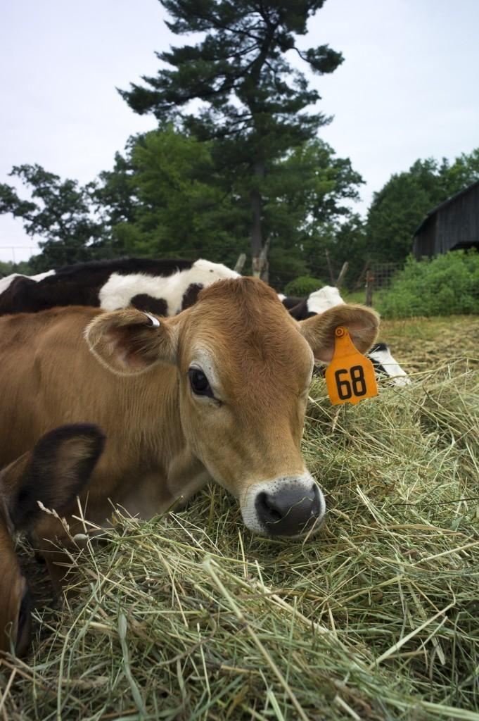Happy Farmerfriday Meet Nicole Fletcher Of Southampton Ma Cow