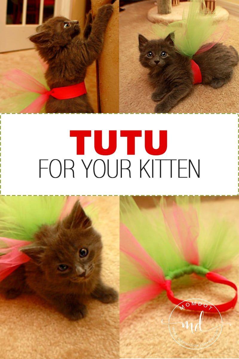 How To Make A Tutu For Your Kitten How To Make Tutu Kitten Tutu Craft