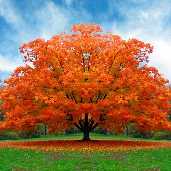 FRASI SULL'AUTUNNO • Anche i più piccini identificano l'autunno come la stagione in cui cadono le foglie. Tuttavia esiste una delicata poesia in questo momento dell'anno in cui la natura cambia i suoi colori. Leggiamo allora assieme le frasi sull'autunno per carpire il fascino di questa stagione.