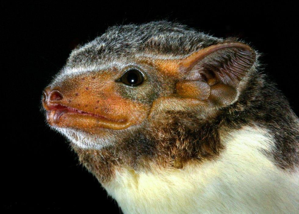 Unbelievable Photos Reveal The Work Of A Real Batman Real Batman Bat Species Cute Creatures