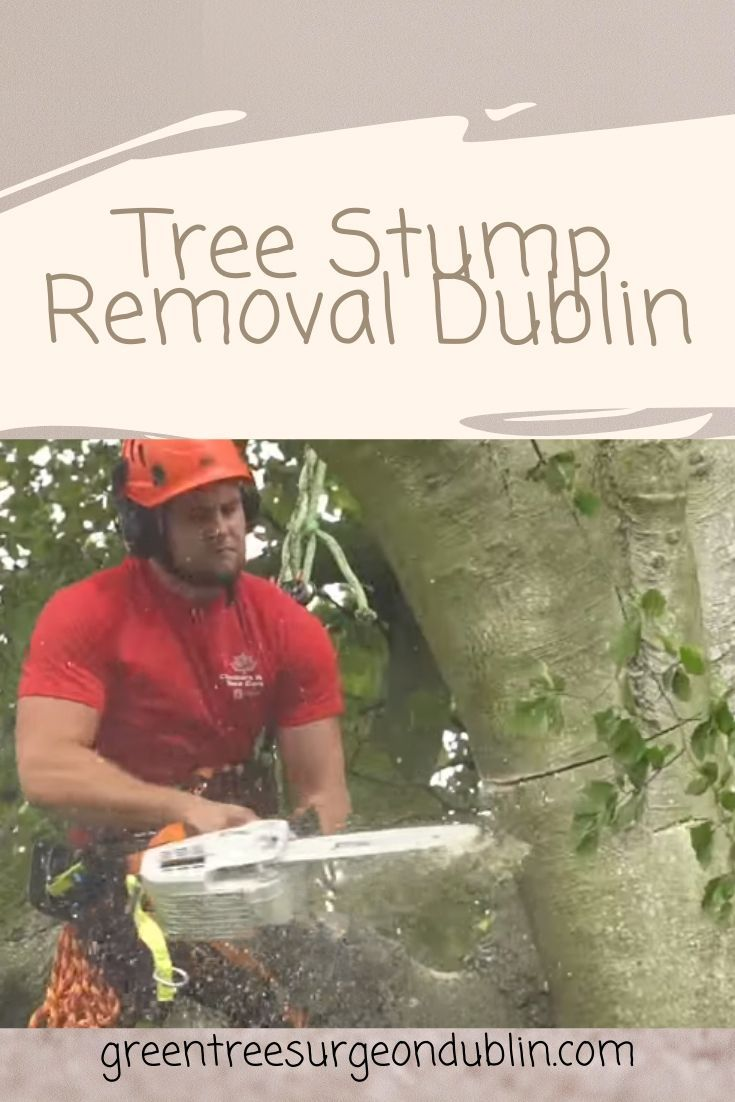 It is very complicated to remove tree stumps sometimes