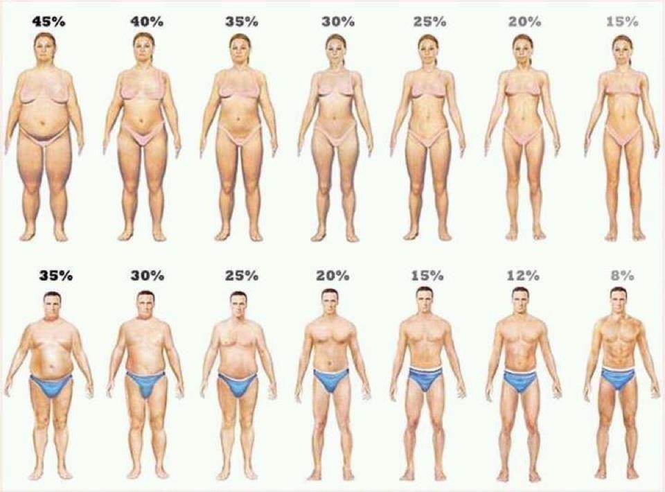 #BodyFat% men and women #fitforduty