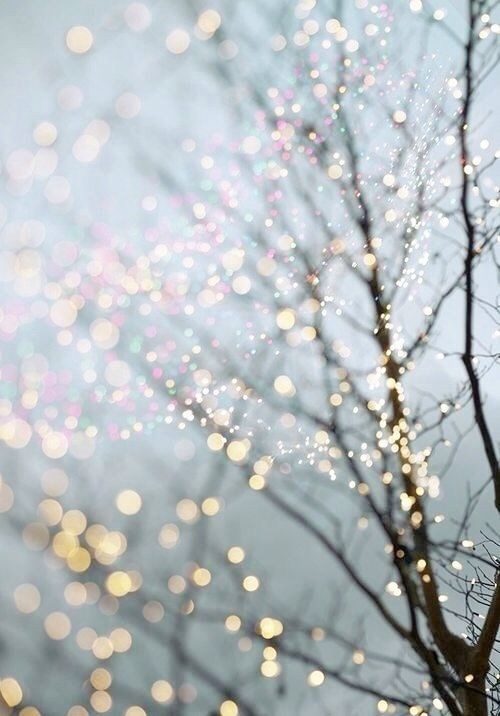 Iphone 5 Wallpaper Christmas Lights Winter Fairy Lights In Trees Christmas Wallpaper Winter Photography