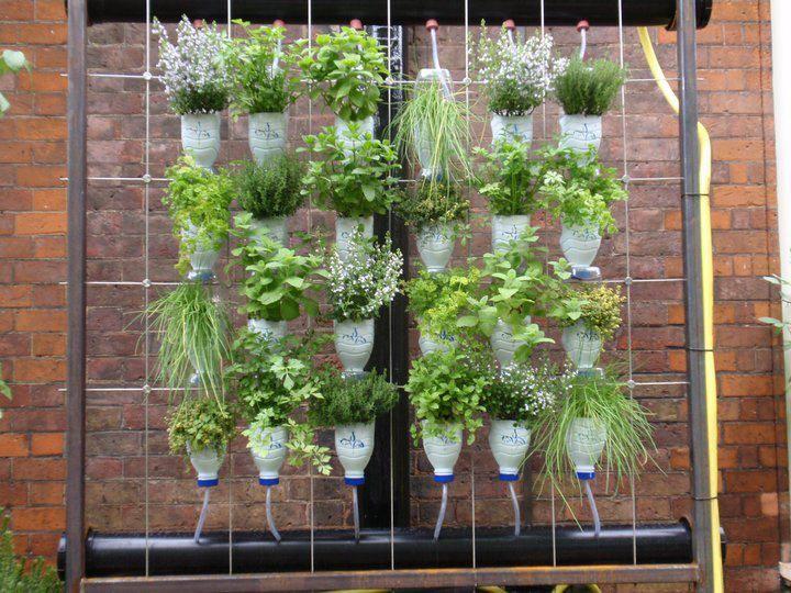 C mo hacer una huerta vertical en casa noticias - Como hacer un jardin vertical de interior ...