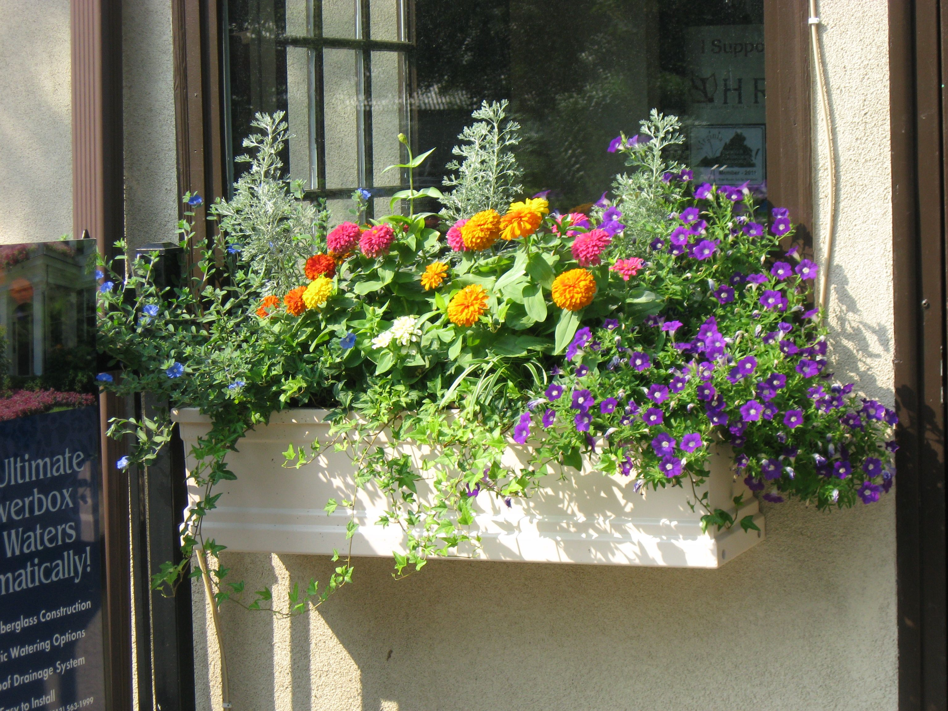 Full Sun Window Boxes Window box flowers, Window boxes