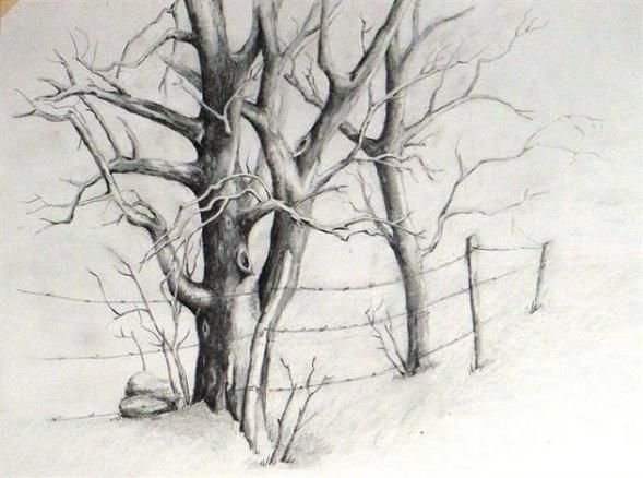 Pencil Drawing Of Trees