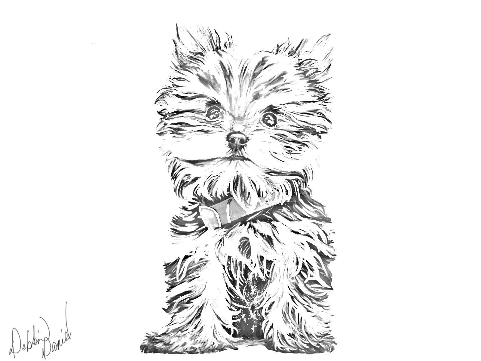 Yorkie Sketch Dog Art Yorkie Dog Drawing [ 1200 x 1600 Pixel ]