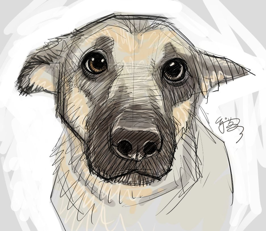 Pin Julie Durant Sketchy Art Drawings Puppy Eyes
