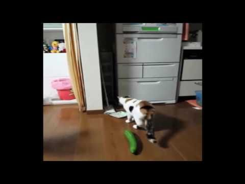 Funny Cat Fails Compilation | Funny Cat Videos Best Funny Videos 2016 | Funny Cats Compilation - http://positivelifemagazine.com/funny-cat-fails-compilation-funny-cat-videos-best-funny-videos-2016-funny-cats-compilation/ http://img.youtube.com/vi/XzhjOGsQCvM/0.jpg  Here are some funny #cats.Kitties, cats. Simply the funniest pets!Funny Cats Funny Cat Videos Best Funny Videos 2016.Check out these funny cat videos … ***Get your free domain and free site builder*** [matc