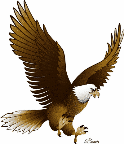 20 different types of eagles with pictures eagle panda and bird rh pinterest com flying eagle images clip art flying eagle clip art free