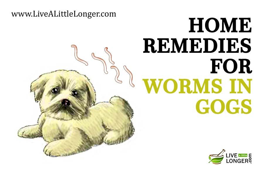 natural remedy for worms in dogs
