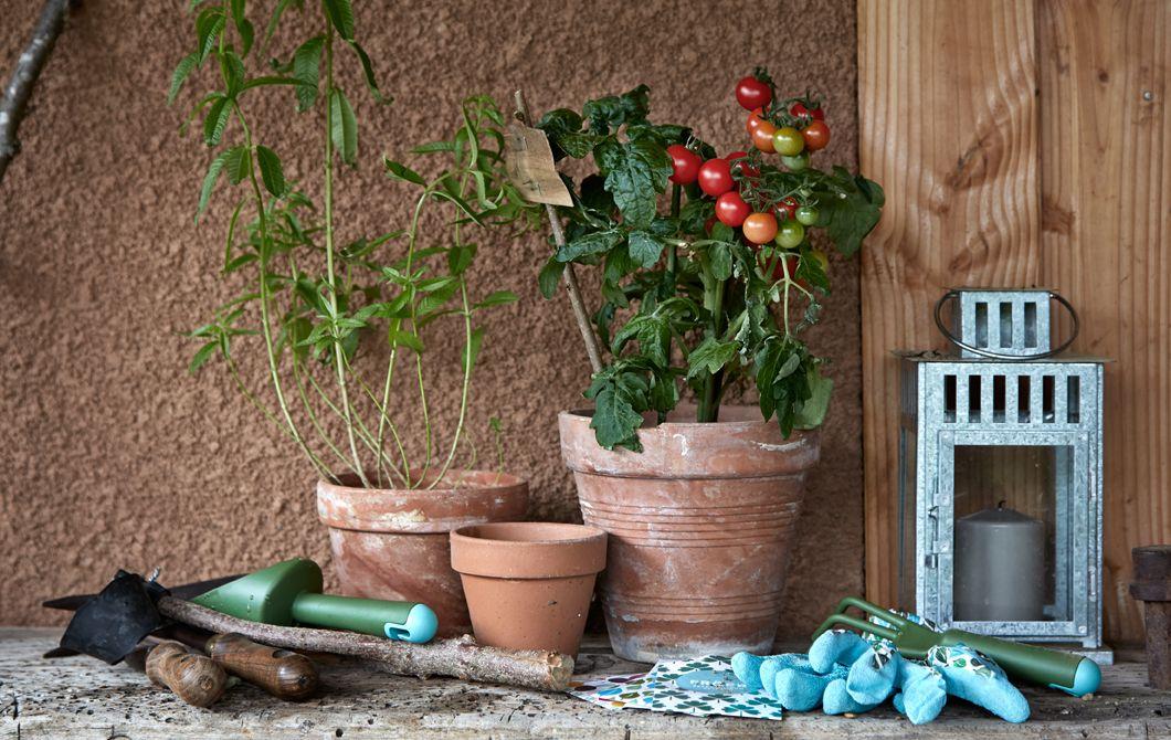 Dyrk grønnsaker i friske farger hjemme