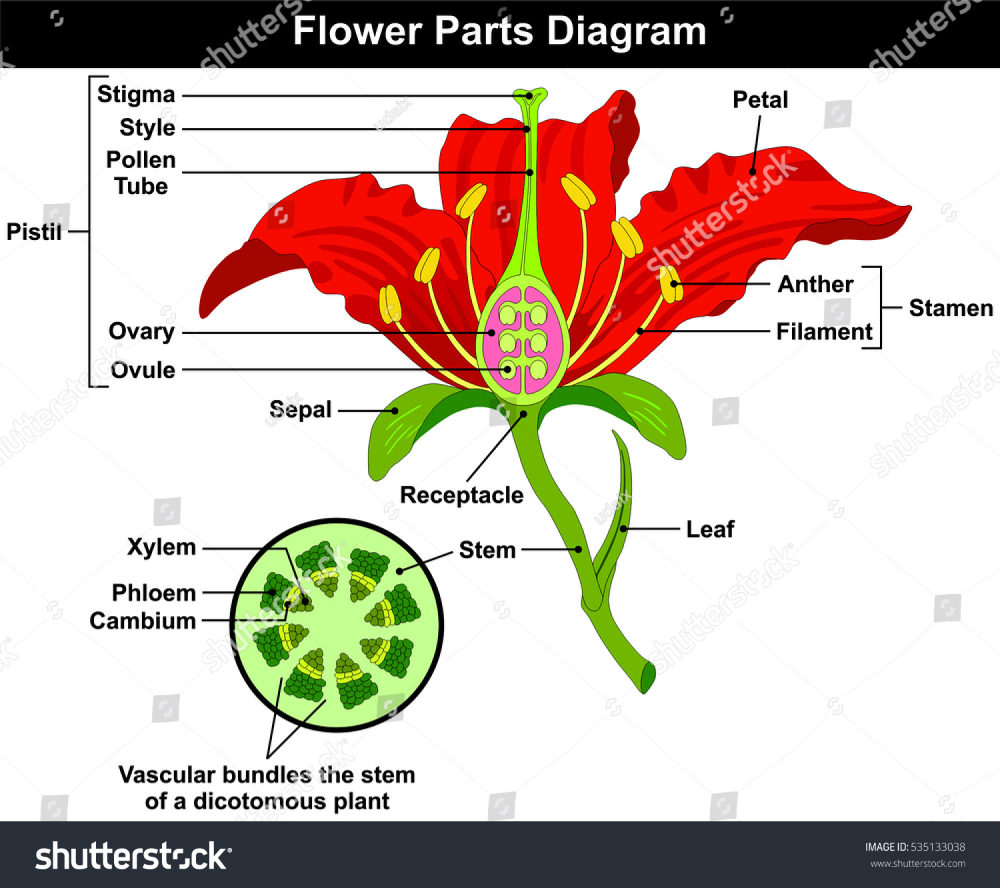 Parts Of A Flower Lovetoknow In 2020 Parts Of A Flower Flower Structure Flower Outline