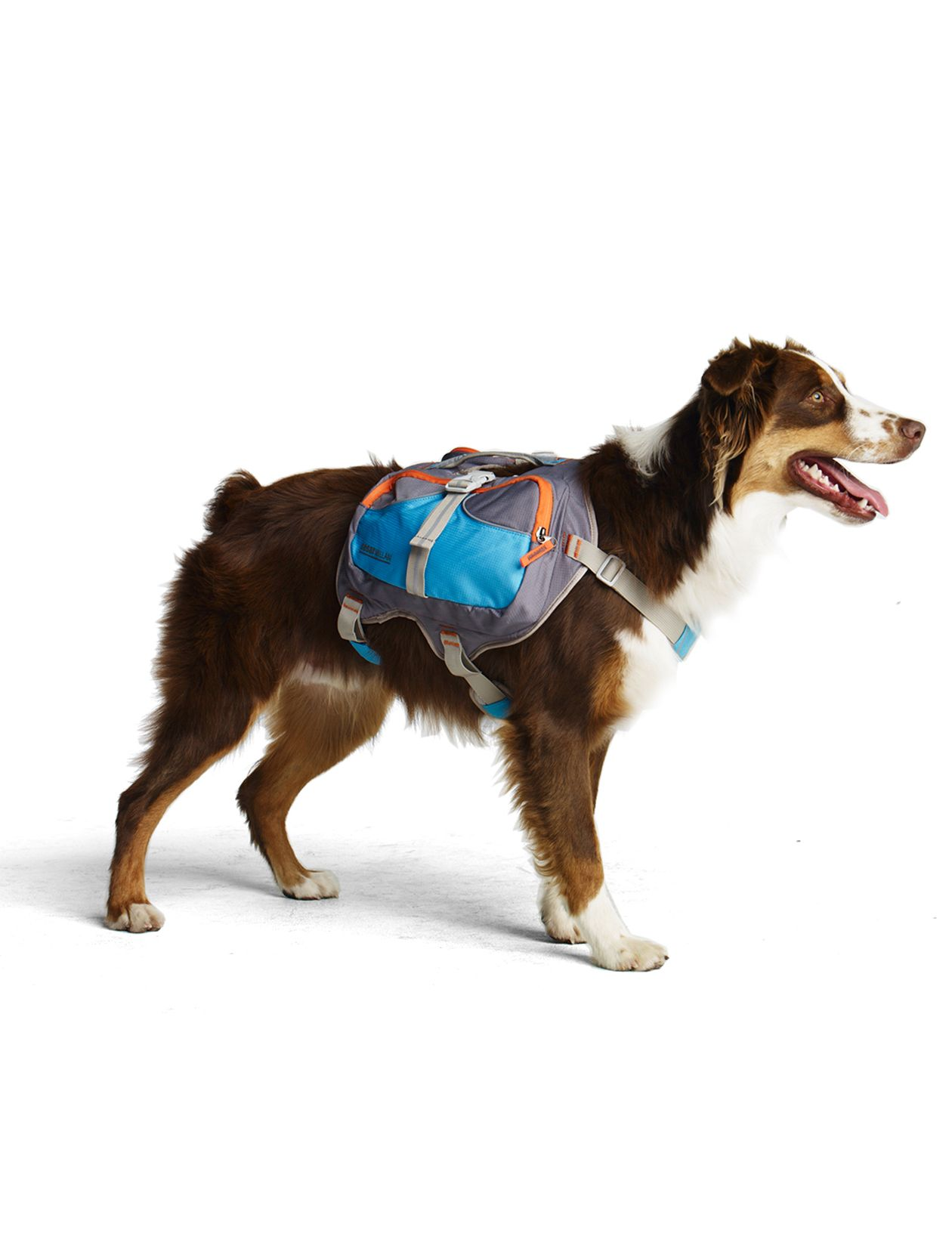 """Cesar says: """"Dogs love having jobs, and if they're focused on walking and carrying, they are much less likely to chase squirrels or bicyclists. There's nothing more therapeutic for a dog than having a job to do, and carrying a backpack is that job."""""""