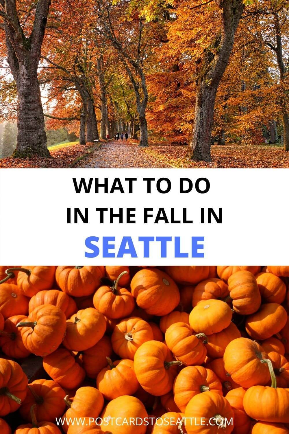 The Best Things To Do In Seattle In The Fall In 2020 Usa Travel Guide Travel Usa Usa Travel Destinations