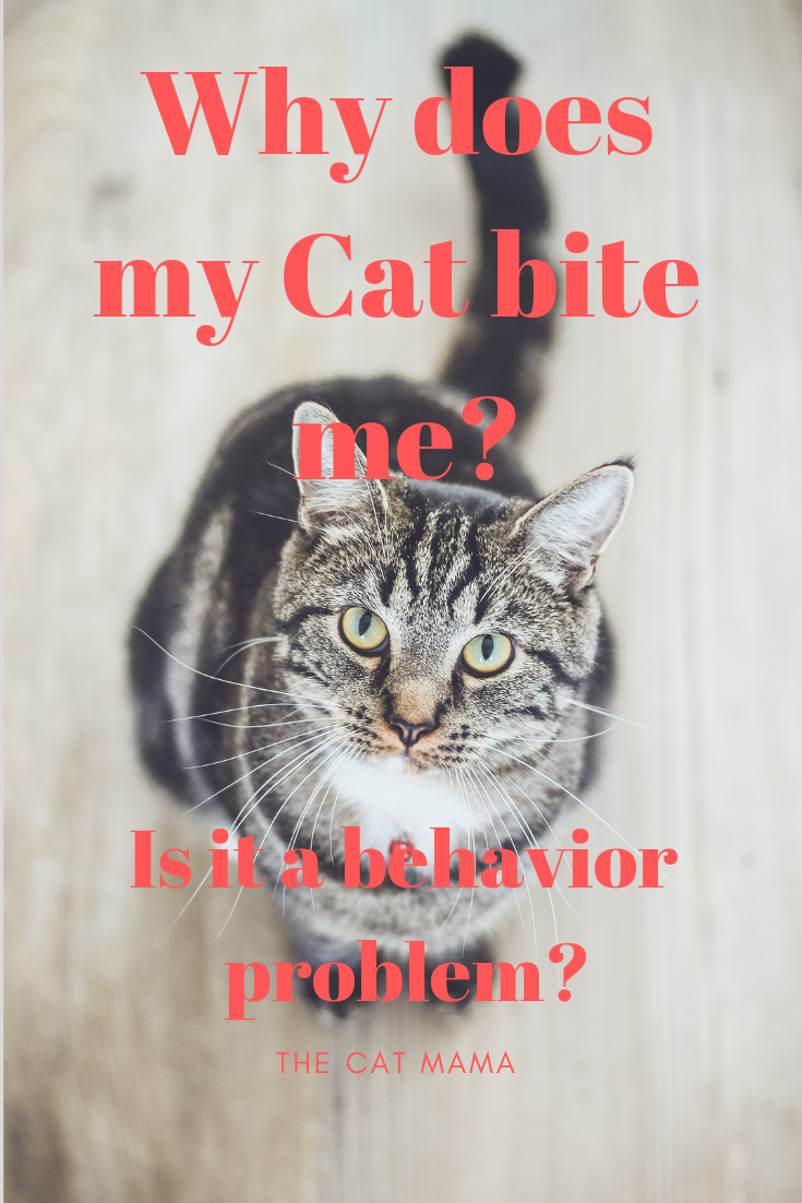 Do Cats Give Love Bites What Does It Mean When Your Cat Bites You Cat Biting Mama Cat Cat Behavior Problems