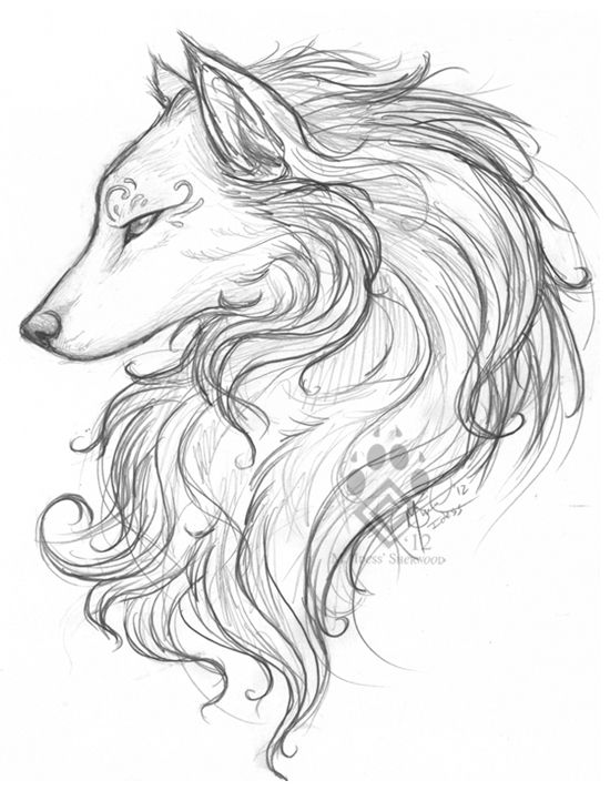 Photo of White Wolf Sketch by Idess on DeviantArt