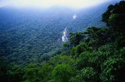 Brazil landforms. Brazil has the largest rain forest in the world ...