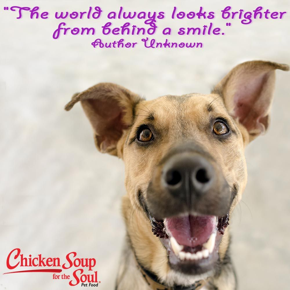 Dog breath image by Chicken Soup for the Soul on My Dog's