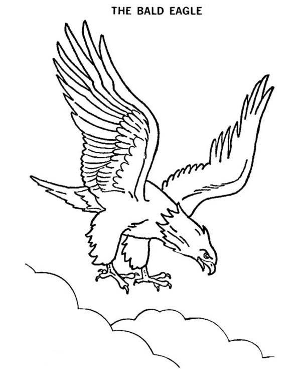 Perfecto Página Para Colorear De Cabeza De águila Calva Colección ...