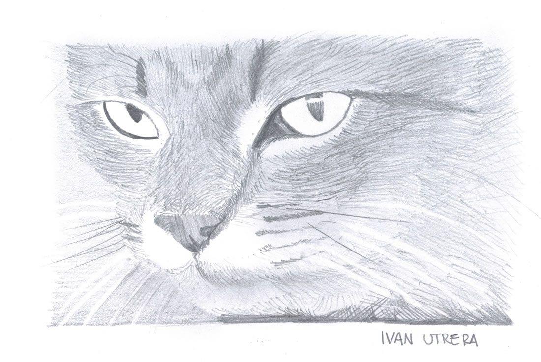 Gatos Dibujos A Lapiz Imagui Dibujos Cats