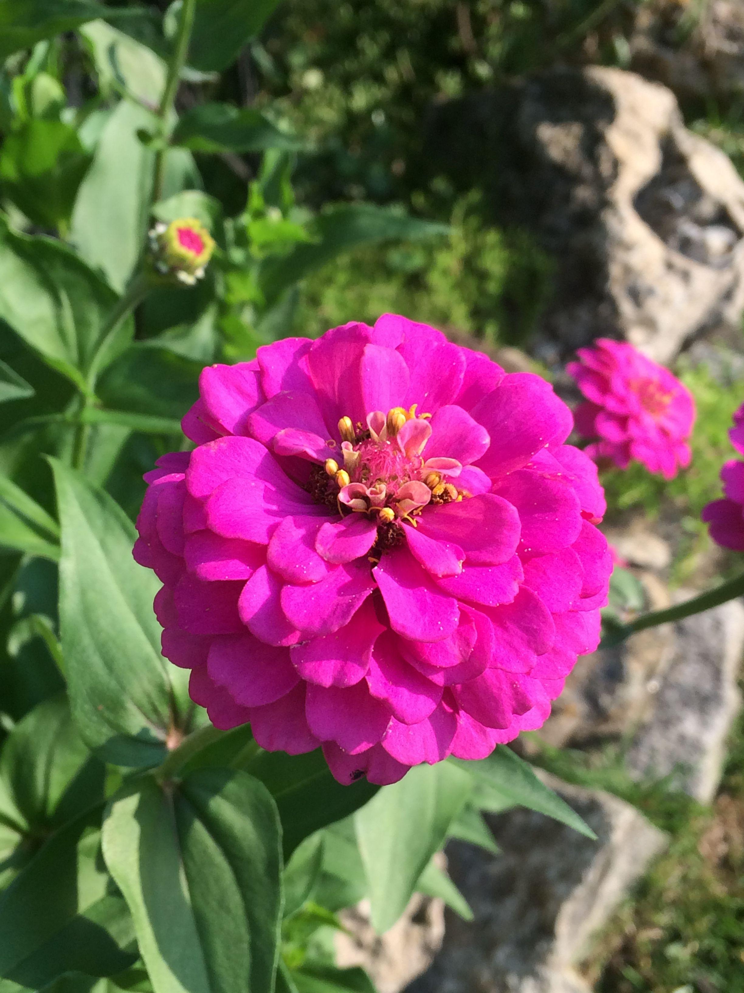 Pin de Jen Copus en My Oakwood Garden | Pinterest