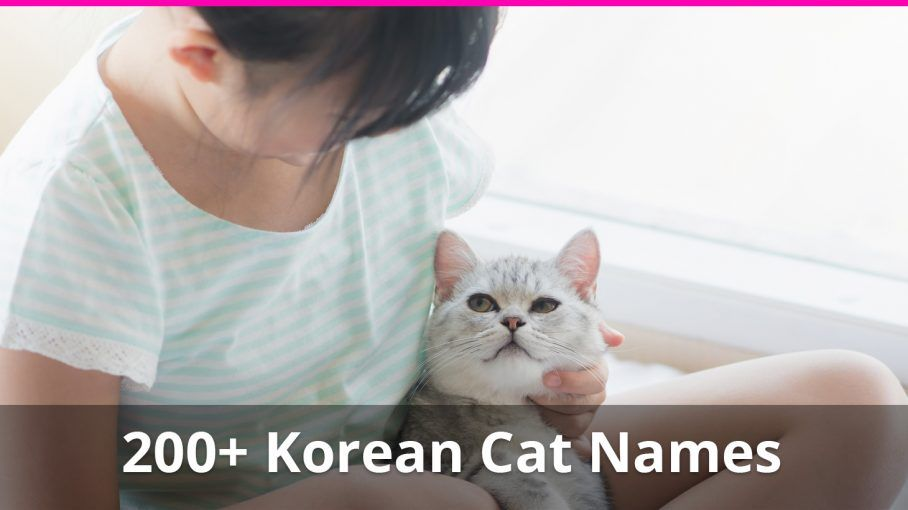 200 Amazing Korean Cat Names With Their Meanings For Male And Female Kitties Cat Names Cute Cat Names Funny Cat Names
