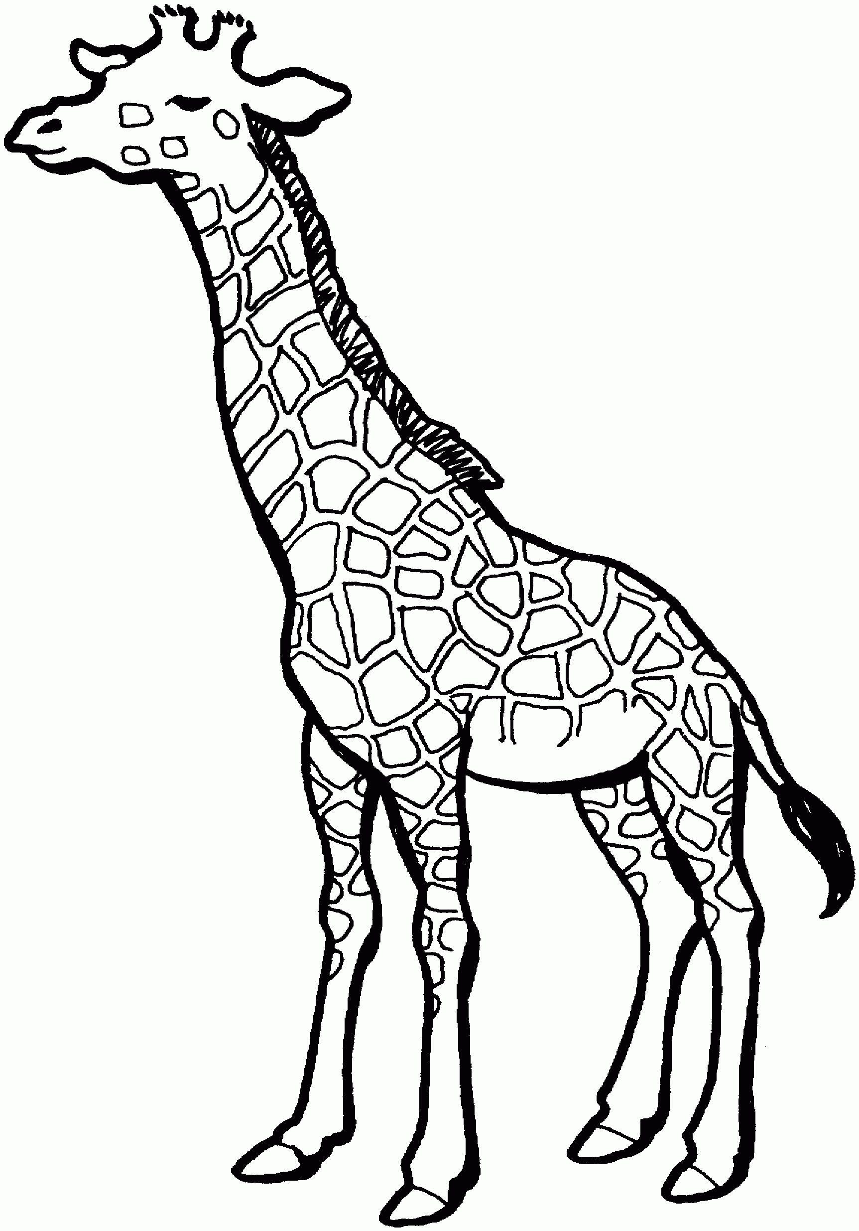 Baby Giraffe Sketch Giraffe Drawing Giraffe Pinterest