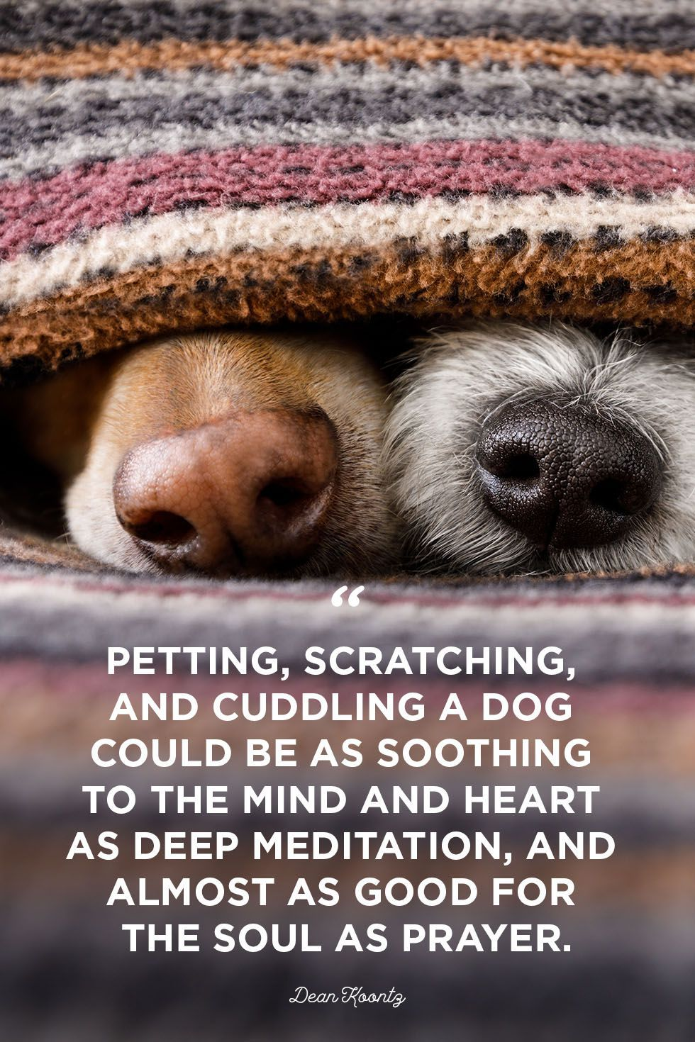 40 Dog Quotes That Will Make Your Heart Melt Puppy Quotes Dog