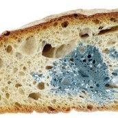 Cuidado Con El Pan Mohoso Recetas De Comida Hechos De Alimentos Pan