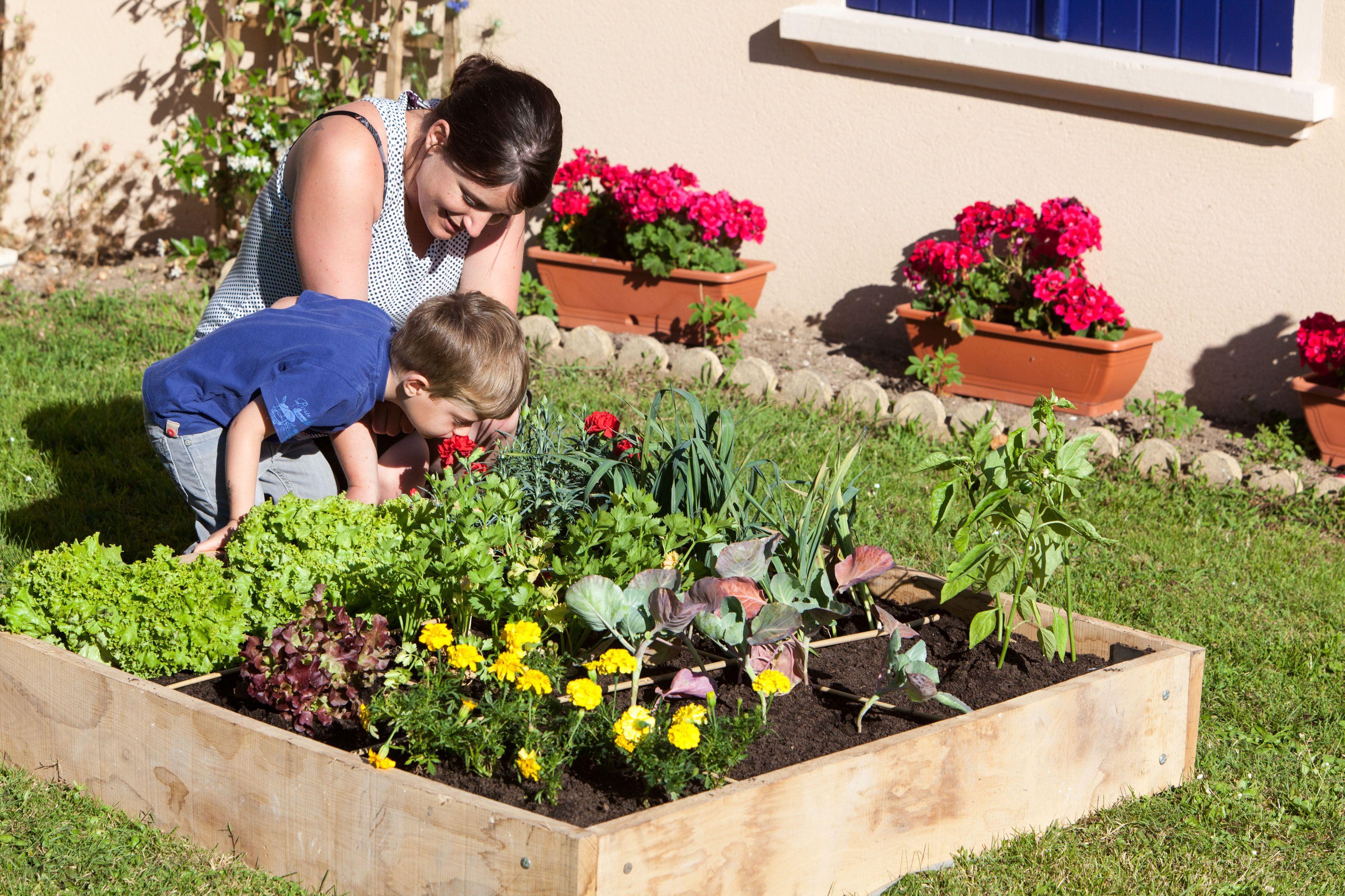Cultiver une carré potager en famille. (avec images