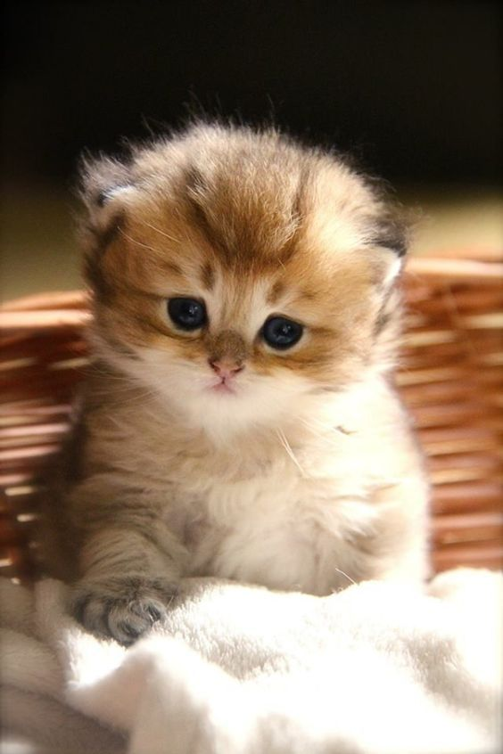 Pin by Bruce Donnelly on Cutie Pies Cute baby cats, Baby