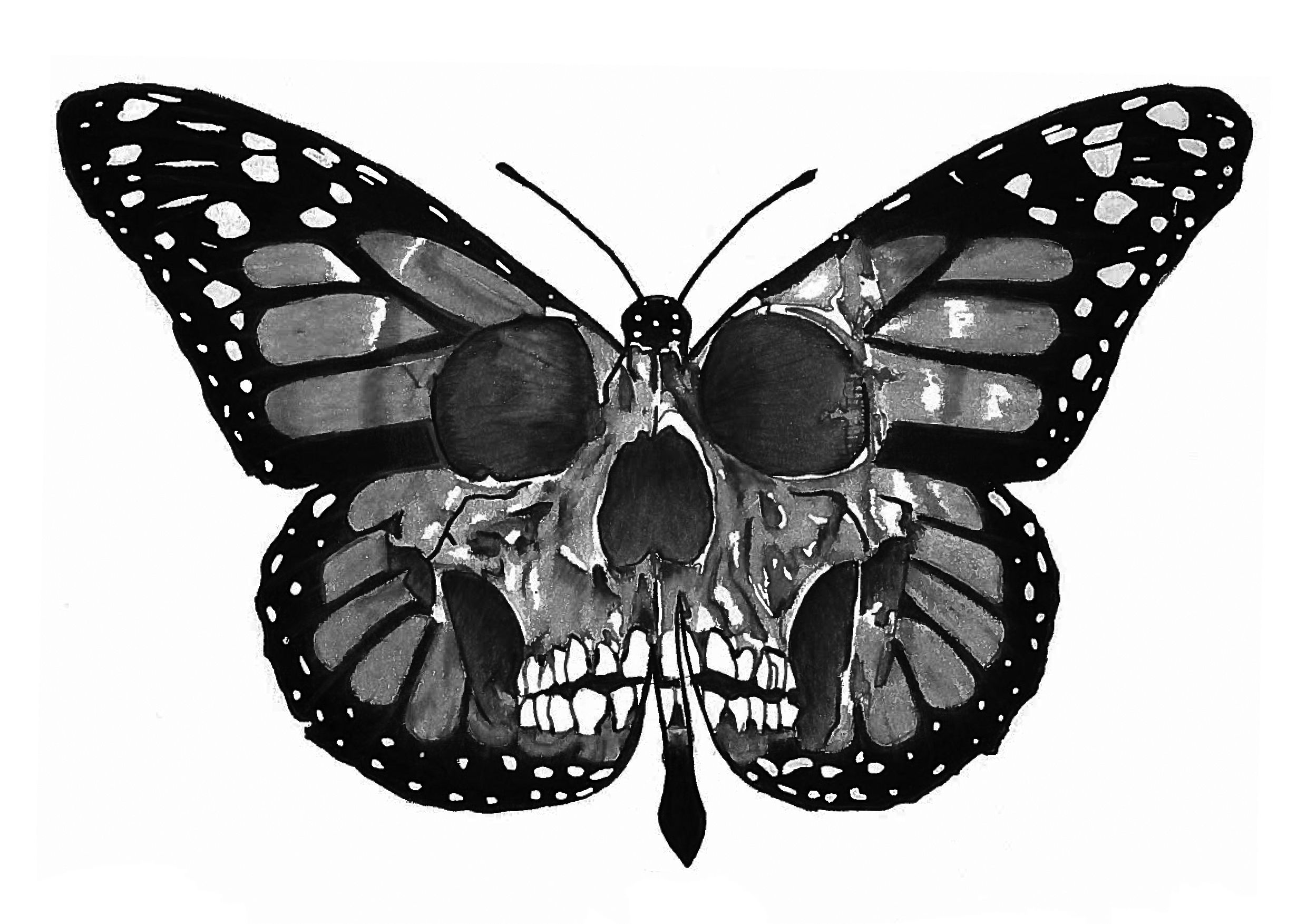 6a4a95422 Black and White Tattoo Design of a Butterfly Skull, Pencil on Paper,  Original Design made by SnCo_art