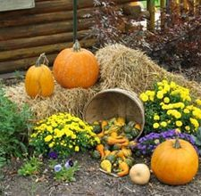 hay for decorating with fall pumpkins