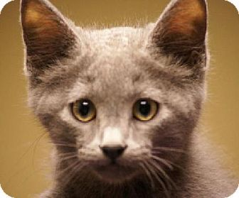 This kitty is up for adoption!!!