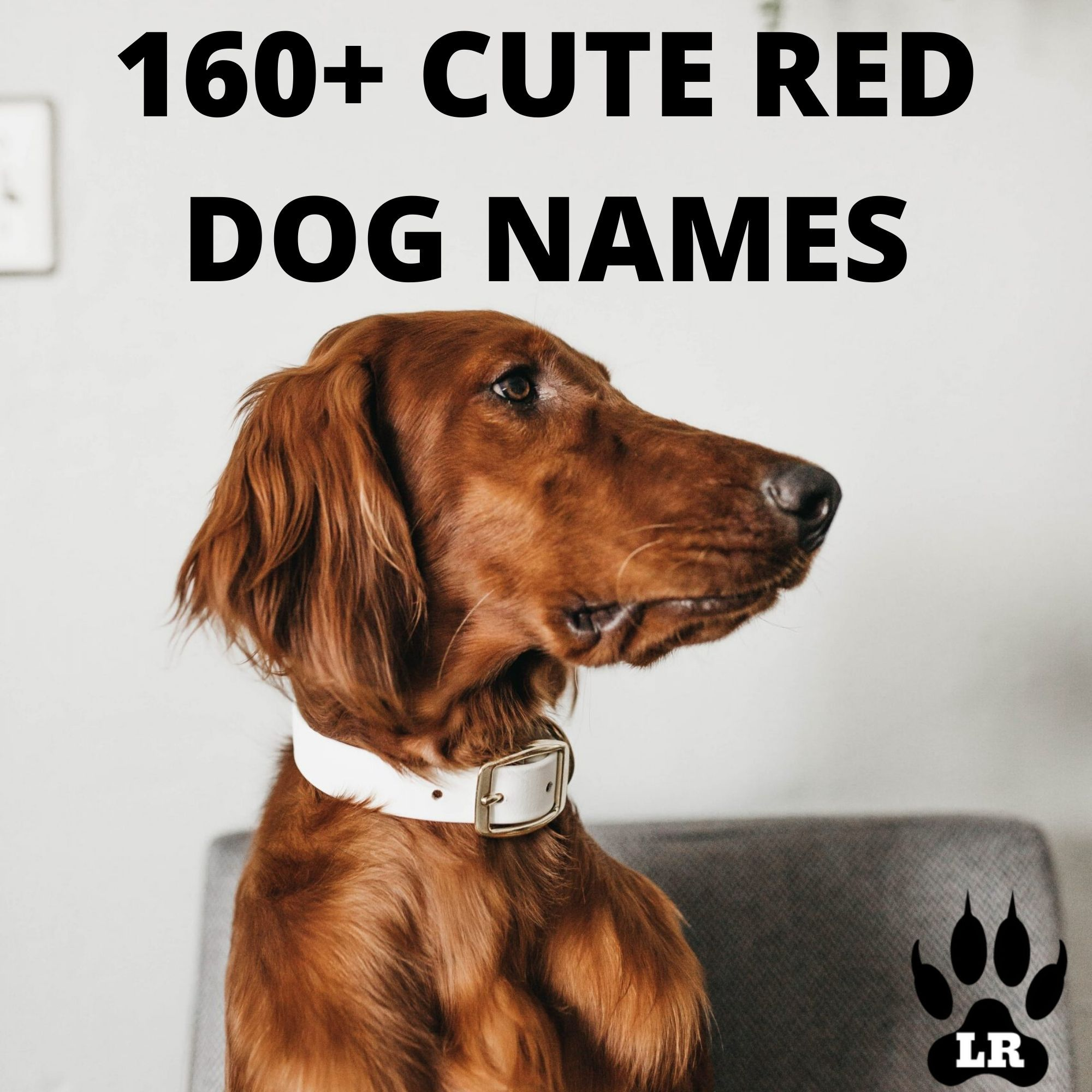 100+ of the best red dog names Dog names, Red dog, Funny