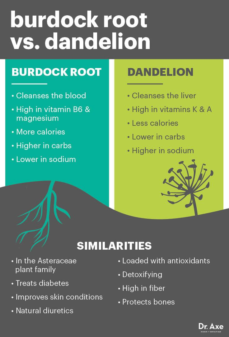 Burdock Root Detoxes Blood Lymph System Skin Natural