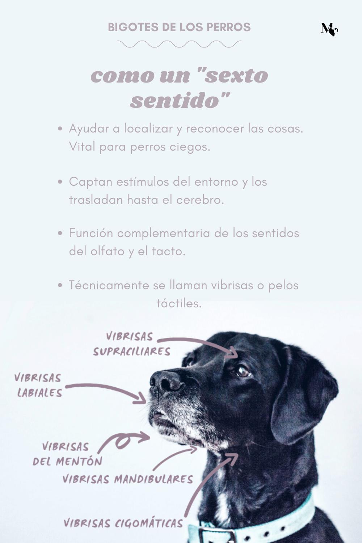 Para Qué Sirven Los Bigotes De Los Perros Perros Bigotes Mascotas