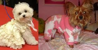 moldes de roupas cirurgicas para cães - Pesquisa Google