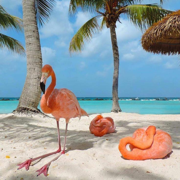 """Удивительные Фотографии on Instagram: """"Море, пальмы и ..."""