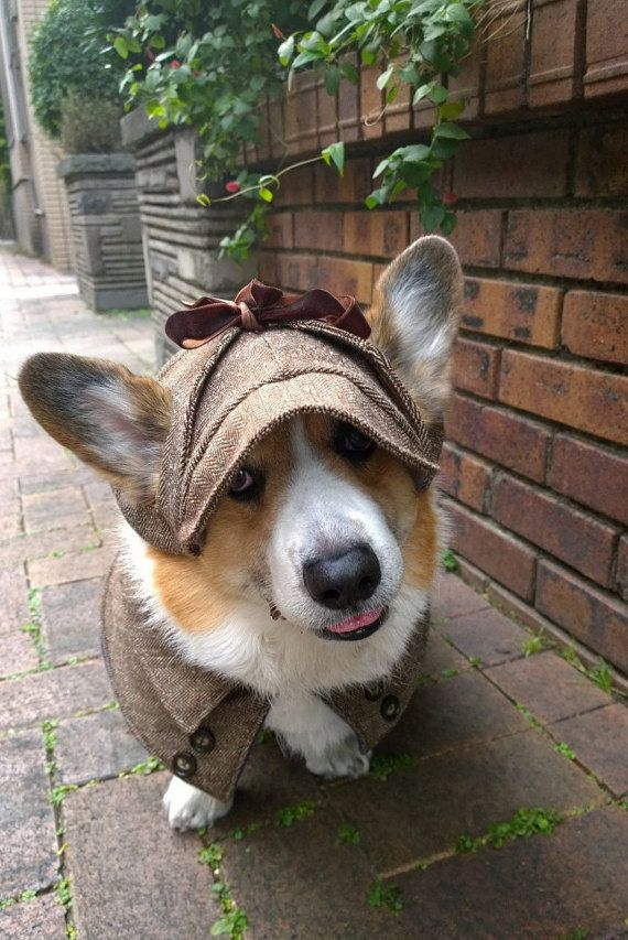 Lovely Herringbone Deerstalker Hat With Ear Holes Very Classic And Comfy Perfect For Keeping Your Doggys Head Warm Or A Sherl Small Dog Coats Corgi Corgi Dog
