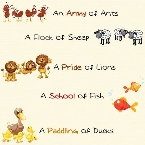 an attractive set of collective nouns explained with examples